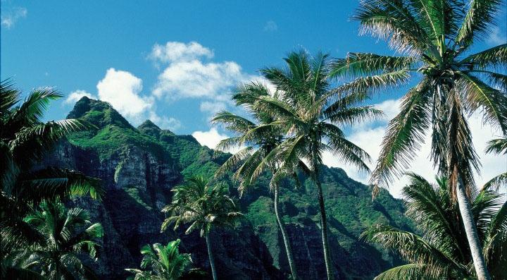 Palm trees beneath blue skies in Oahu, Hawaii