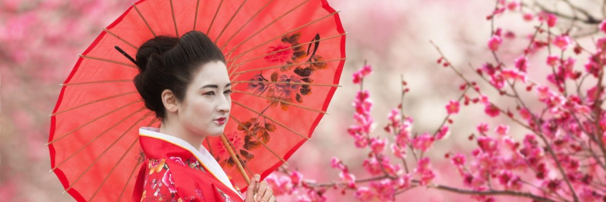 Geisha with pink umbrella, standing beneath a cherry blossom tree in Japan. Image by rod_julian
