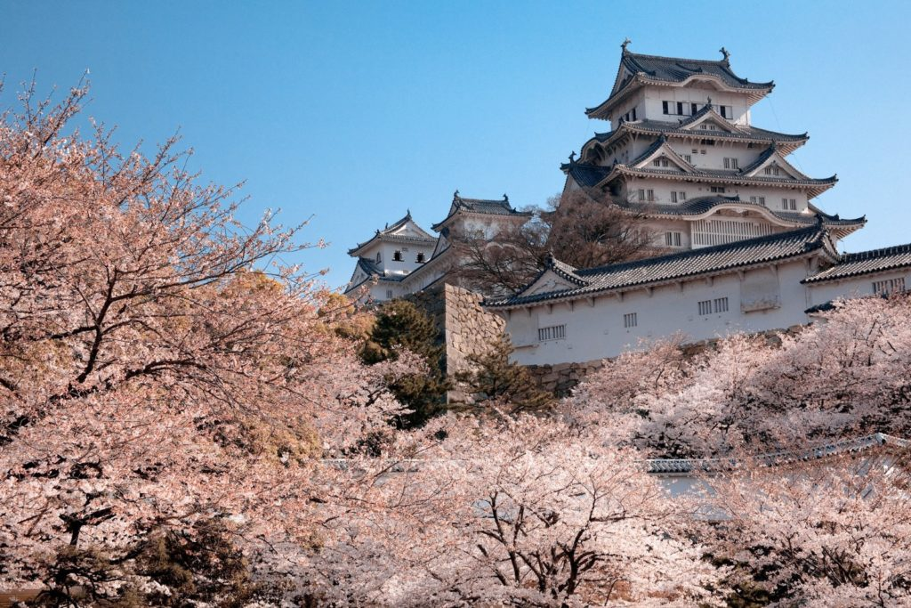 Himeji Castle, Japan, behind a curtain of beautiful pink cherry blossom trees. Image by knet2d